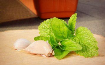 using herbs to stop snoring